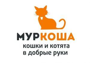 приют для кошек муркоша москва